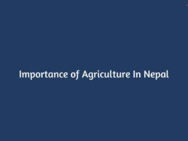Importance of Agriculture In Nepal